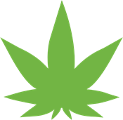 Learn How to Become a Master Grower of Legal Marijuana