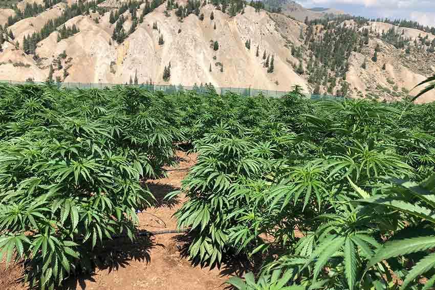 Colorado Growing Classes